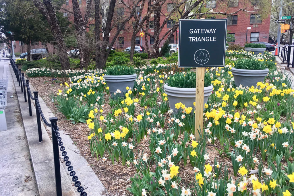 """A wooden post with dark green sign that reads """"Gateway Triangle"""" with the NYC Parks symbol of a maple leaf in a circle coming out of a garden filled with white and yellow daffodils and giant potted plants with trees and a building in the background."""